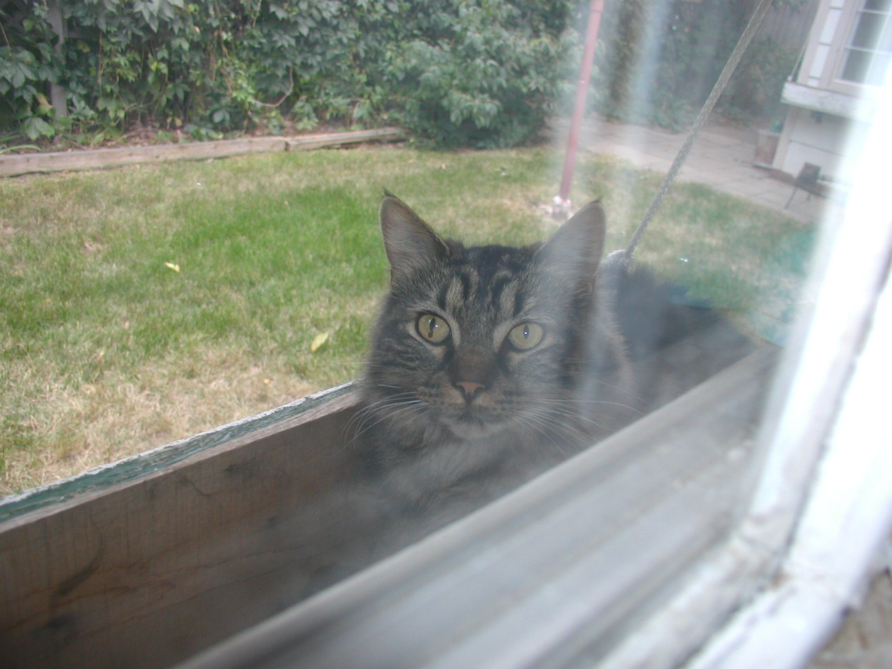 image of my cat Boo in a window flower box