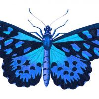 image of a blue butterfly and an armadillo
